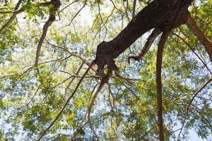 under trädet foto