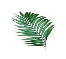 grönt frodigt blad foto