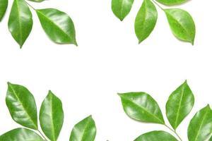 grupp gröna blad på vitt foto