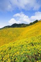 landskap i Thailand med gula blommor foto
