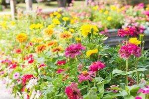 blommor i parken foto