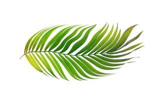 grönt tropiskt blad foto