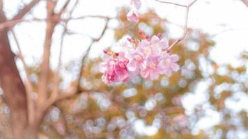 vacker rosa vårblomning foto