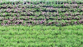 periwinkle blommor vertikal trädgård
