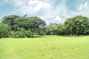 grön gräsmatta och träd i en park foto