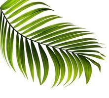 krökt grönt tropiskt blad isolerat foto