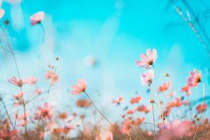 rosa blommor på blå himmel