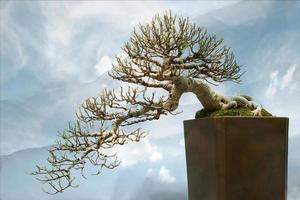 bonsai trädväxt foto