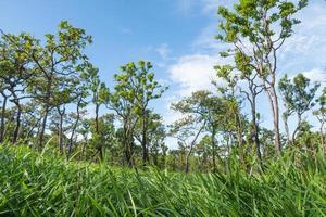 träd på kullen