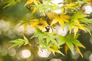 löv på trädet foto