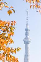 tokyo himmel träd foto