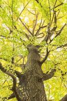 träd på hösten foto