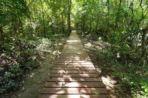 trä gångväg i skogen foto