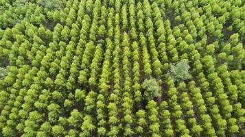Flygfoto över grön trädskog