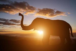 silhuett av en elefant på solnedgången bakgrund foto