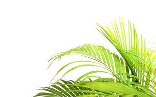 palmträd mot den vita väggen foto