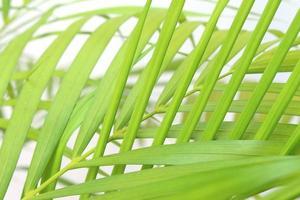 närbild av ljusgröna blad foto