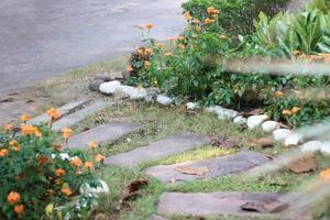 steg i en trädgård foto