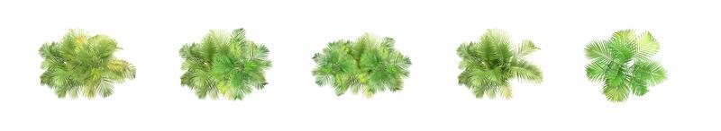 ovanifrån tropiska växter foto