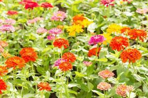 vackra blommor i parken