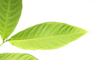 konsistens av ett grönt blad