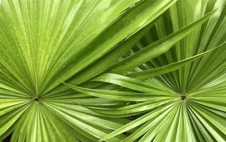 närbild av tropiska växter foto