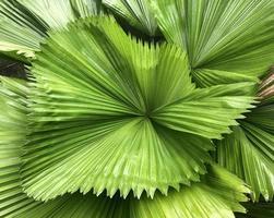 ovanifrån av tropiska löv foto