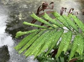 regndroppar på palmblad foto