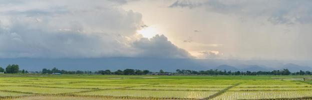 risfält vid solnedgången foto
