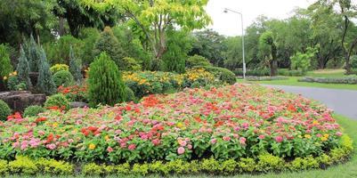 blomsterrabatt nära vägen foto