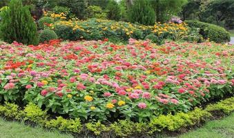 blommor i en blomsterrabatt foto