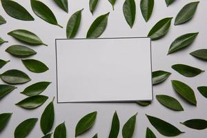blad på vit bakgrund med plats för text foto