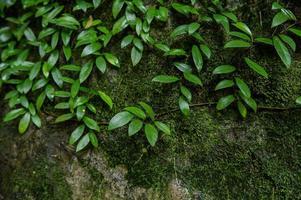 små gröna träd som täcker marken foto