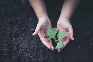 två händer som håller plantan som ska planteras foto