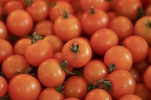 röda mogna tomater