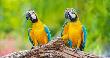 två färgglada ara under dagen foto