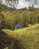 brunt trähus i skogen foto