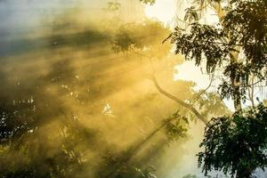 sensommarsolljus som bryter igenom träden