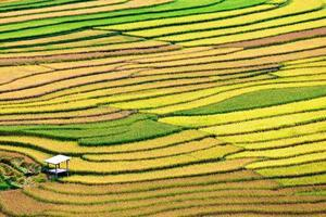 terrassrisfält på mu cang jai, vietnam