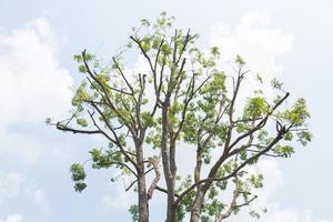 himlen bakom ett stort träd foto