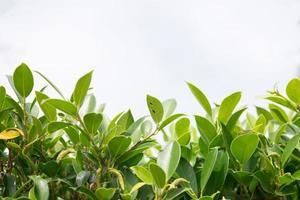 gröna växter och blad bakgrund foto