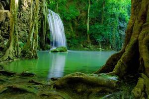 vatten faller i grön skog