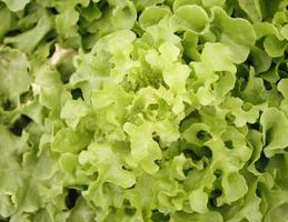 ljusgrön sallad foto