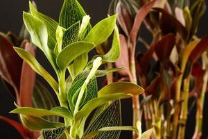 växtlöv på en svart bakgrund i studion foto