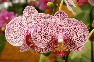 vackra orkidéblommor foto