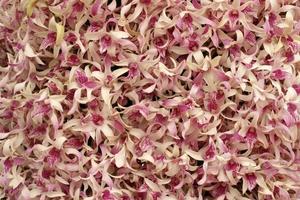 vackra lila orkidéer foto