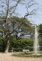fontän i en trädgård foto