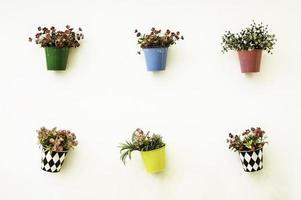färgglada blomkrukor på väggen foto