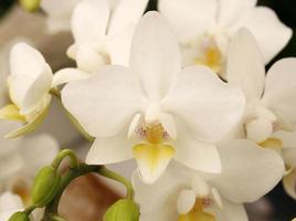 grupp vita orkidéer foto