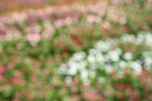 defokuserad blomma bakgrund foto